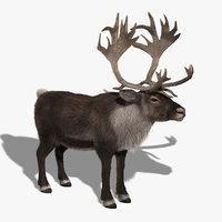 3d reindeer fur