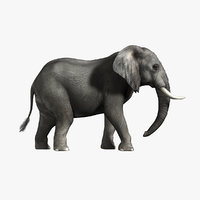 3d photorealistic african elephant rigged model