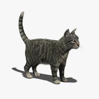 cat mackerel tabby fur 3d model