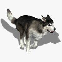 3d ma siberian husky fur animations