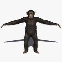 chimp fur primate x