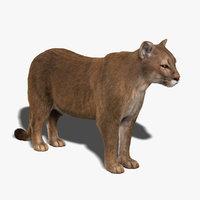 cougar fur 3d model
