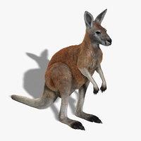 kangaroo red shave 3d model