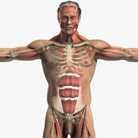 Male Body, Skeletal and Muscular System Pack (Textured)