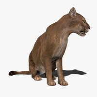 maya cougar fur animation