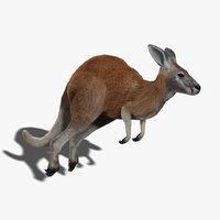 kangaroo rigged fur 3d model