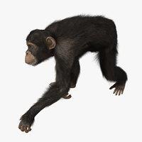 3d chimp fur animation
