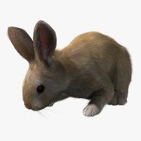 rabbit cream rigged fur 3d model