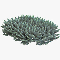 acropora coral 2 3d model