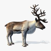 max reindeer animation christmas