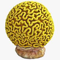 3d brain coral