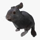 Hare 3D models