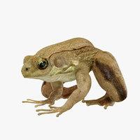 maya photorealistic green frog animation