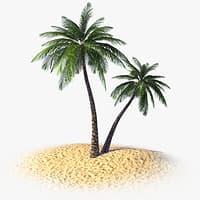 tropical palm tree 3d model