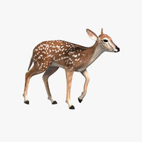 fawn animation 3d model