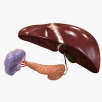3d lwo hepatic liver pancreas