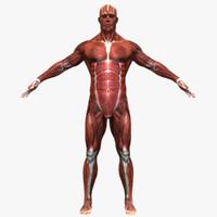 3d model muscular male