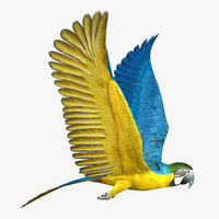 parrot rigged 3d ma