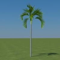 palm carpentaria acuminata 3d 3ds