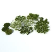 3d grass natural model