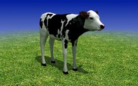 Low Poly 3D Model. Calf Cow