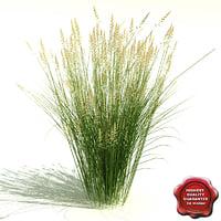 calamagrostis x acutiflora karl 3d max