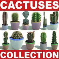 c4d cactuses cactus