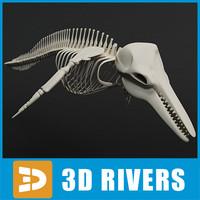 max dolphin skeleton animal