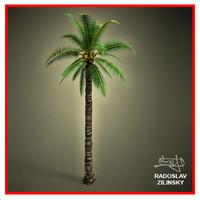 3d adult palm realistic
