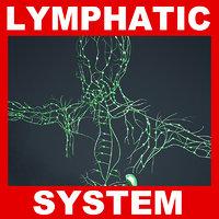 3ds max human lymphatic lymph