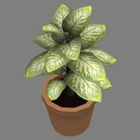 maya ready plant small