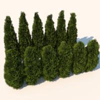 cedar bushes plants 3d model