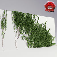 Wall with ivy V4