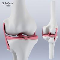 3d knee ligament model