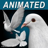 Dove ( Flying )
