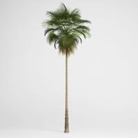 3d model mexican fan palm 10
