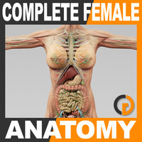 dxf human female anatomy -