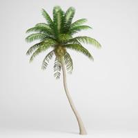 max coconut palm 04