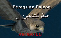 peregrine falcon wings folded 3d max