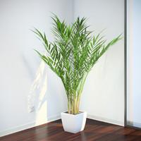 3dsmax areca palm plants