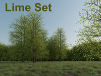 lwo lime tree set
