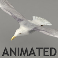 rigged flying seagull 3d max