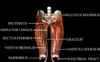 hip joint 3d model