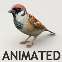 Sparrow Animated