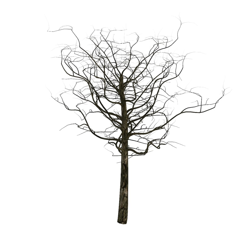 Tree 3ds Max environment Background Camera Map