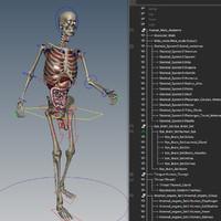 ma human skeletal internal organs