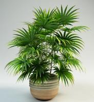3d lady palm