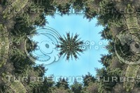 circleoftrees.jpg