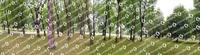 Forest Panorama FULL.zip