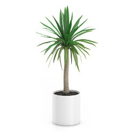 3d model palm tree pot